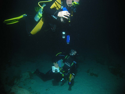 "Curacao Scuba Playa Kalki ""Alice in Wonderland"""