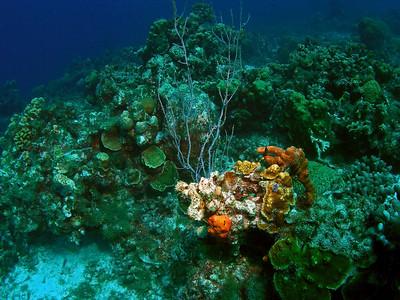 Curacao Scuba Porto Marie