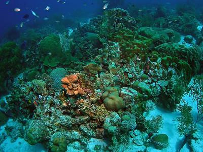 Curacao Scuba Rediho City with Ocean Encounters West