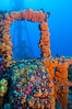 Duane tubastra coral
