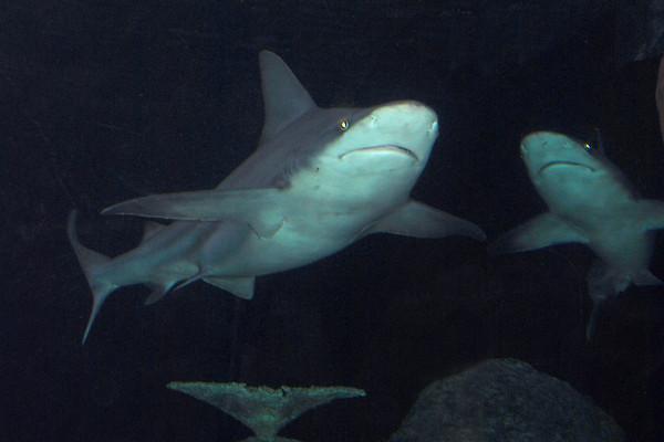 Dangerous Aquatic Animals