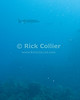 "A small school of barracuda hunts near the rocks at the north end of St. Eustatius.  St. Eustatius (Statia), Netherlands Antilles.<br /> <br /> <br /> <br /> <br /> ""St. Eustatius"" ""Saint Eustatius"" Statia Netherlands Antilles ""Lesser Antilles"" Caribbean underwater diving ocean SCUBA dive sand bottom sea floor rocks fish barracuda"