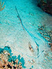 "A stingray.  St. Eustatius (Statia), Netherlands Antilles.<br /> <br /> <br /> <br /> <br /> ""St. Eustatius"" ""Saint Eustatius"" Statia Netherlands Antilles ""Lesser Antilles"" Caribbean SCUBA dive diver sea bottom sea floor rocks coral hole reef sand bottom sea floor seafloor sea bed ray stingray"