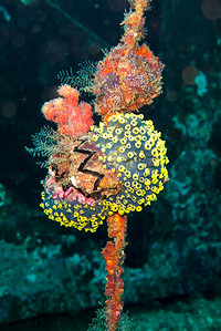 Colorful coral on the old anchor line