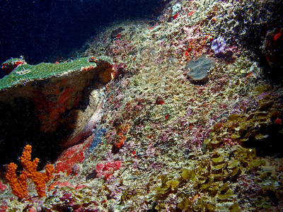 "Dive BVI Scuba ""The Chimney,"" Great Dog Island   http://www.divebvi.com/dive-sites/dog-islands/"