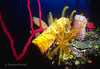 ROW PORE ROPE SPONGE (RED) - With Yellow & Brown Tube sponges, Azure Vase Sponge, Yellow Crinoid and more