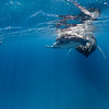 Kids Swimming With Humpback Whales