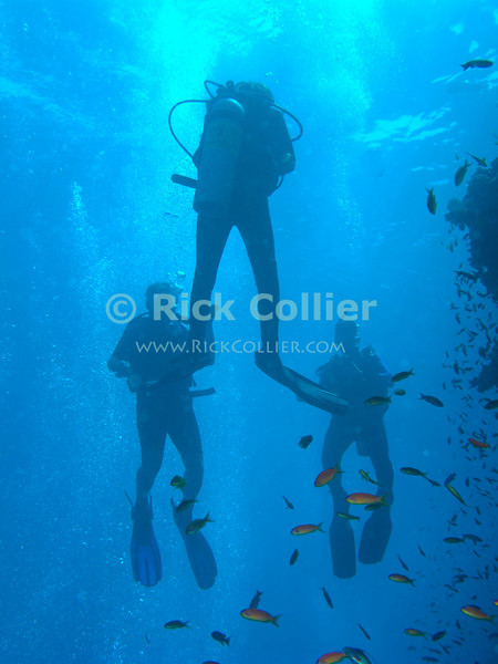 "Red Sea, Egypt -- Divers ascend through a cloud of antheas. © Rick Collier / RickCollier.com.<br /> <br /> <br /> <br /> <br /> <br /> Egypt; ""Red Sea""; vacation; travel; destination; underwater; uw; ""u/w""; scuba; ""scuba dive""; ""scuba diving""; dive; diving; coral; reef; ""coral reef""; ""dive site""; ""Ras Muhammad""; ""Ras Mohamed""; ""national park""; ""underwater park""; ""Ras Muhammad National Park""; ""nature reserve""; shark; ""shark reef""; diver; divers; fish; anthea; scalefin; ""scalefin anthea""; surface; surfacing;"