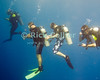 """A group of scuba divers hover in mid-water, waiting out their """"safety stop"""" at the end of a dive on the """"Chasbo's Corner"""" dive site at Turneffe Atoll, Belize.  © Rick Collier"""