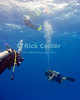 """Scuba divers put up a """"safety sausage"""" marker buoy to mark their place for the dive boat as they wait out their safety stop ending a scuba dive at the """"San Clemente"""" shallow dive site off Cozumel, Mexico.  © Rick Collier"""