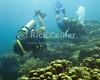 """Diving Bonaire, Netherland Antilles -- Divers explore the reef. (""""Ol' Blue"""" dive site)   © Rick Collier<br /> <br /> <br /> <br /> <br /> Bonaire; """"Netherlands Antilles""""; Caribbean; tropic; tropical; vacation; destination; scuba; dive; diving; underwater; """"scuba dive""""; """"scuba diving""""; """"Ol' Blue""""; diver; divers;"""