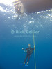 St. Eustatius (Statia) Underwater - Divemaster Remco waits out his safety stop beneath the dive boat, near the surface at the end of a scuba dive.  © Rick Collier