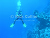 Red Sea, Egypt.  A divemaster waits above the reef for his group to catch up.  © Rick Collier<br /> <br /> <br /> <br /> <br /> <br /> scuba diver divers Egypt 'Red Sea' 'Ras Mohammed' underwater u/w blue divemaster blue