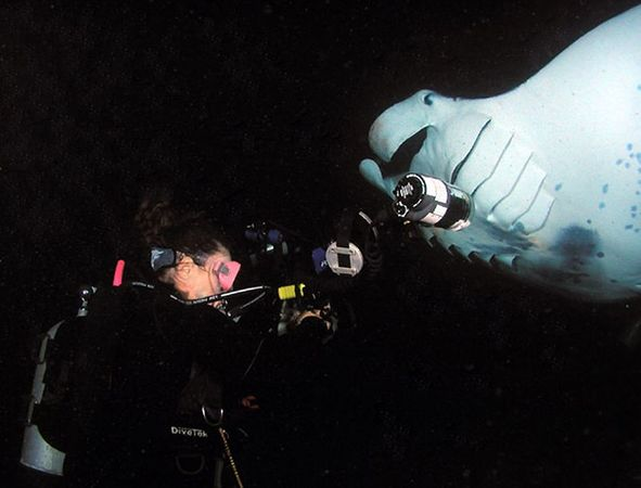 Yours truly, Sharon Williams<br /> Manta Ray night dive<br /> Taken by: Dick Lundholm