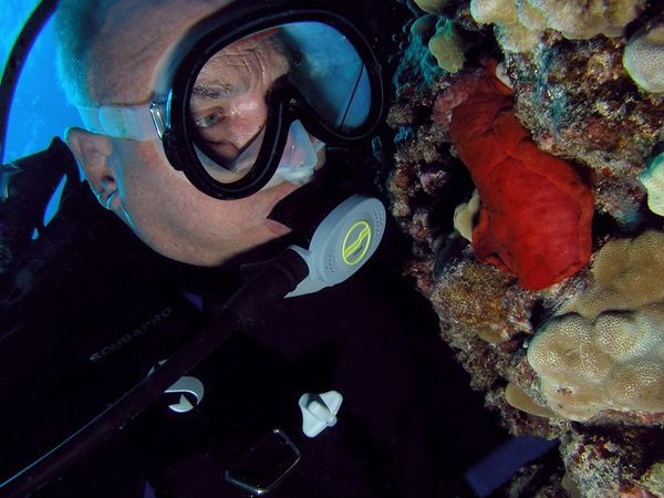 Dick Lundholm<br /> looking at a Spanish Dancer Nudibranch<br /> Kona Coast of the Big Island
