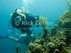 "Diving Bonaire, Netherland Antilles -- Divers explore the reef at the ""Karpata"" dive site.  © Rick Collier<br /> <br /> <br /> <br /> <br /> Bonaire; ""Netherlands Antilles""; Caribbean; tropic; tropical; vacation; destination; scuba; diving; dive; ""scuba diving""; underwater; diver; divers; reef; ""Karpata"";"