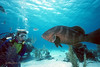 """NASSAU GROUPER - """"What are you lookin' at?"""""""