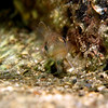 19. okt 2009 - Tiny cod.