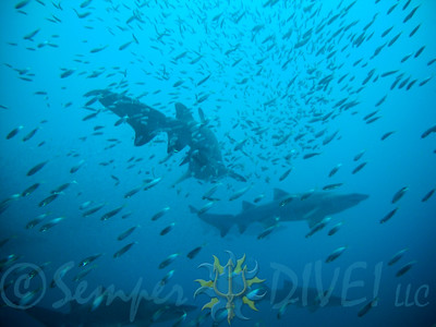 Diving -- Cape Hatteras, NC 2013