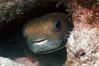 Porcupinefish  -  Marathon, FL