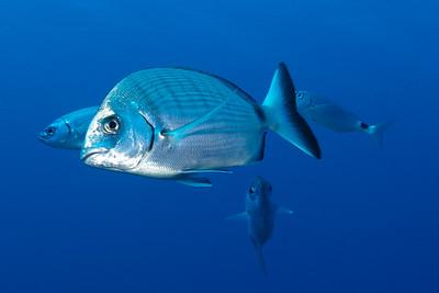 Beautiful World - Underwater