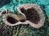 An unusual shaped Barrel Sponge