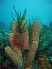 Tube Sponge and Crinoid