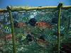 Fish traps do not discriminate!