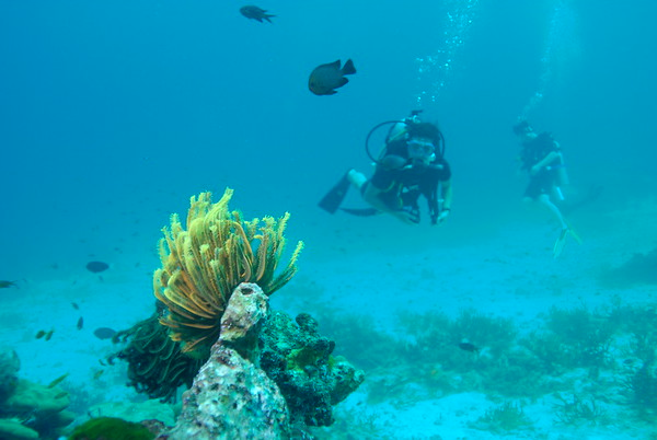 Coral Reef Invertebrates