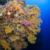 North Horn, East Wall, Osprey Reef