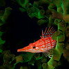 Winner - Open Macro