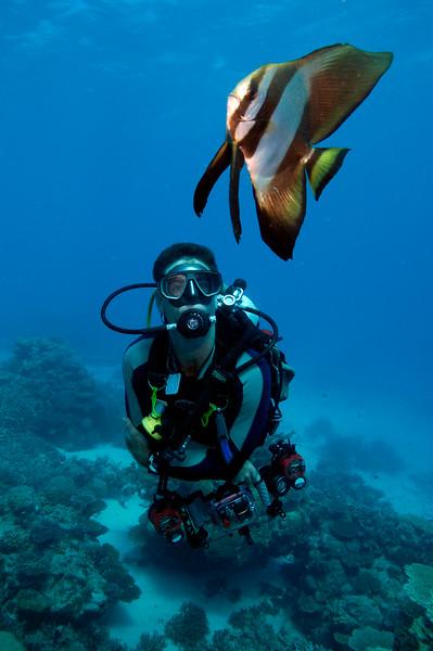 Diver with Batfish