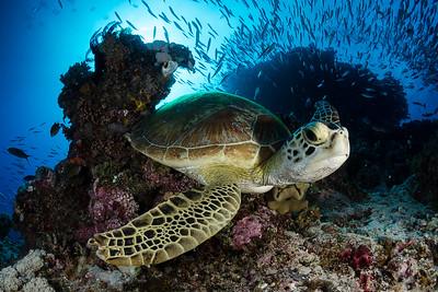 FNQ Reefs