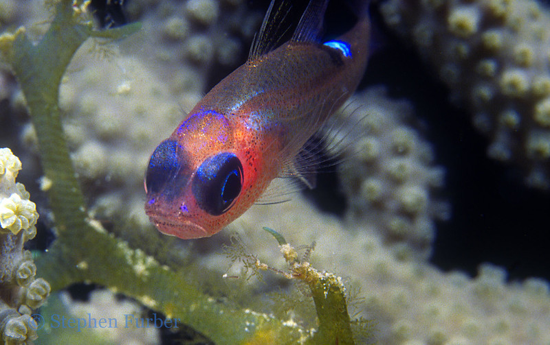 GOBY - Unknown