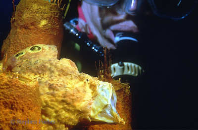 LONGLURE FROGFISH - Inhaling a giant rush of water to capture prey