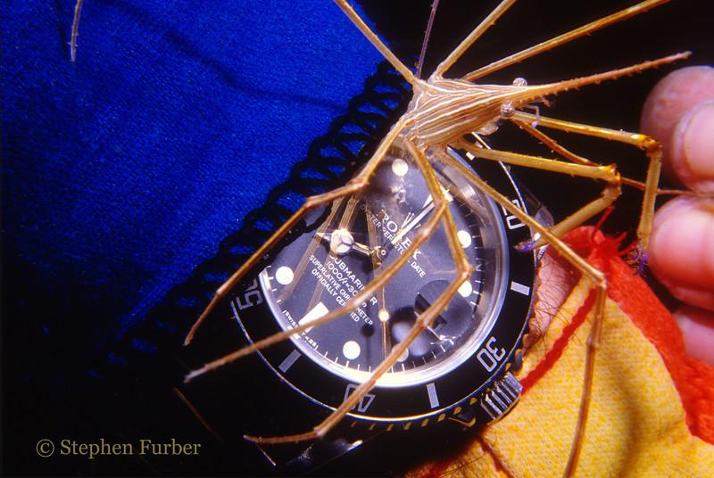 YELLOWLINE ARROWCRAB - Rolex Submariner