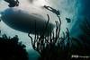 Divers Return