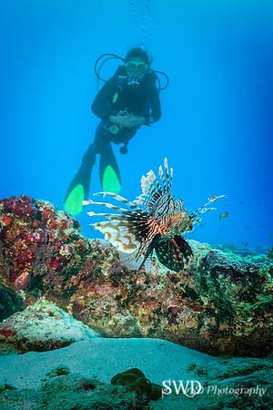 Common Lionfish and Linda