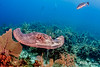 Southern Stingray - Grand Cayman