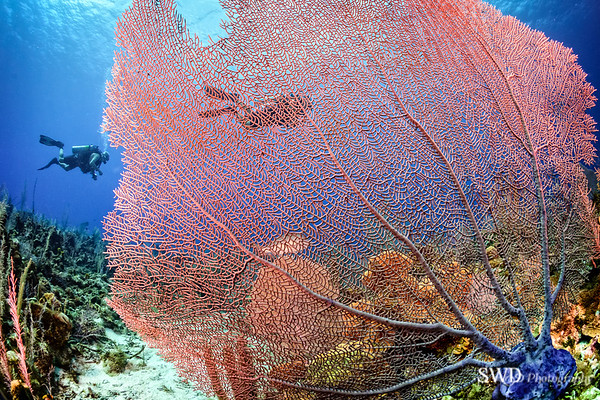 Sea Fan Landscape