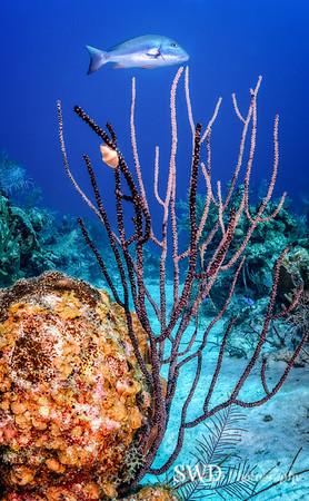 Grand Cayman Seascape