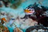 Tobaccofish - Grand Cayman