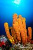 Seascape - Yellow Tube Sponge and Sunburst, Grand Cayman