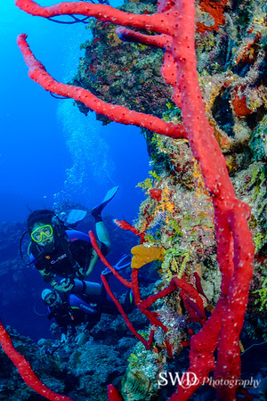 Diver and Pore Rope Sponge