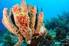 Tube Sponge