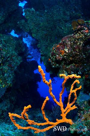 Branching Sponge