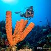 Patrick and Tube Sponge