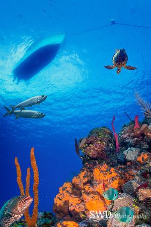 Diving Grand Cayman - An Underwater Mural