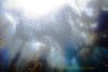 giant school of baitfish, catalina