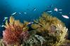 catalina island reef scene